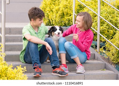 Cute children - happy teen boy and girl playing with puppy Australian Shepherd dog, outdoors. Friendship and care concept.