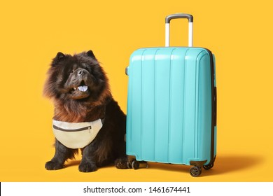 Cute Chow-Chow dog with suitcase on color background