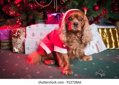Cute Christmas dog in santa dress and tree with decorations and gifts on the background