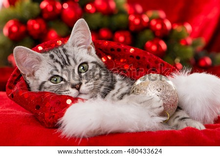 Cute Christmas Kitten Stock Photo (Edit Now) 480433624 - Shutterstock