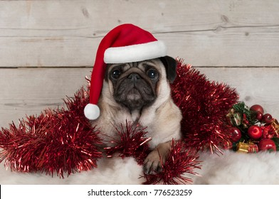 cute Christmas pug puppy dog, lying down in red tinsel wearing santa claus hat, on sheepskin with ornaments and vintage wooden background