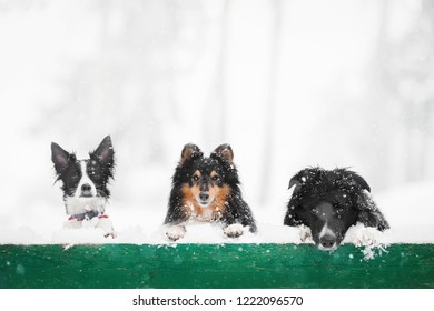 cute close up portrait of three dog on a green snow covered fence