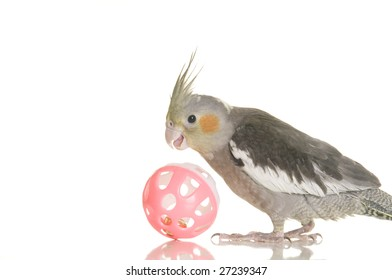 A cute cockatiel plays with a pink ball. White background.