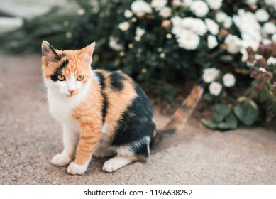 Cute colorful pussycat in garden