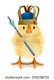 Cute coole Küchenkönig oder Prinz mit Krone und Skepter einzeln auf weißem, lustigem konzeptionellem Bild
