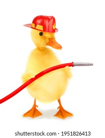Cute cool duckling fireman duck firefighter with helmet and fire hose funny conceptual image
