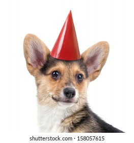 a cute corgi with a party hat on