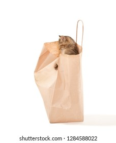 Cute curiosity kitten playing with paper bag isolated on white