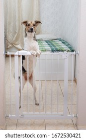 Cute curious dog standing near safety gate in light room and looking at camera