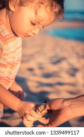 Cute curious kid girl toddler portrait playing on beach with hermit crab during summer vacation concept childhood lifestyle