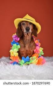 Hund-Hund mit gelbem Hut und Hawaiianischer Tropenblumengarland am Hals. Auf orangefarbenem Hintergrund im Studio
