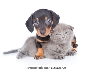 Cute dachshund puppy embracing kitten. Isolated on white background