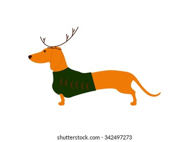Cute dachshund wearing Christmas suit, green jersey decorated with red stripes and brown reindeer horns