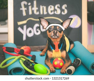 Cute dog with a ball. Dog football player  or trainer . Dog Fitnes sport  and lifestyle concept.