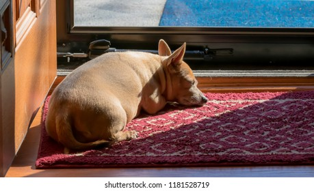 Cute dog basking in the sun by door animal photography