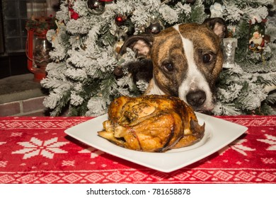 A Cute Dog Begging for the Holiday Dinner