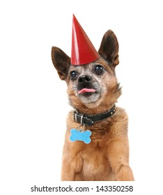 a cute dog with a birthday hat on