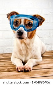 A cute dog in blue safety glasses  resting on a wooden surface. White background.