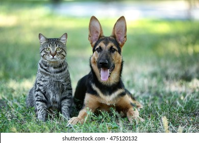 Pic of cute dog and cat