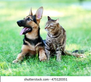Cute dog and cat on green grass