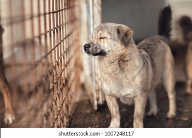 Cute dog caught by hingheri who is housed in a cage at the public shelter built by the town hall for dogs on the street or dogs abandoned by dog owners. Behing netting cage with fence mesh