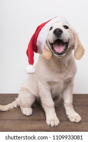 Royalty Free Christmas Dog Images Stock Photos Vectors Shutterstock
