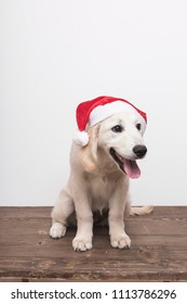 Cute dog with Christmas Hat on white background. Copy space.