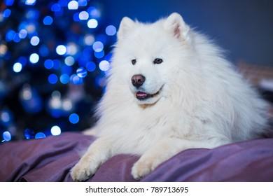 Cute Dog Christmas Lights Stock Photo Edit Now 789713701