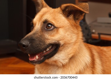 Cute dog, close up shot