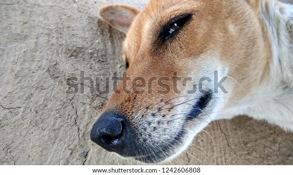 Cute dog closeup