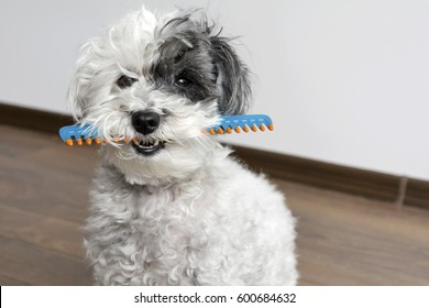 cute dog with comb in the mouth