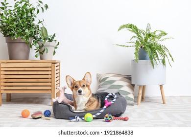 Mignonne chien avec différents accessoires pour animaux de compagnie à la maison