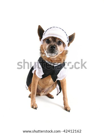 Cute Dog Dressed Maid Stock Photo Edit Now 42412162 Shutterstock