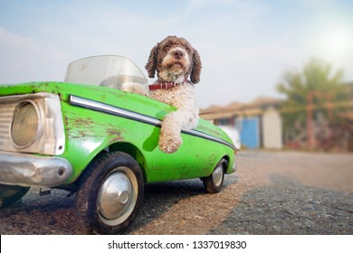 cute dog driving green retro car