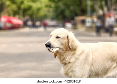 Cute dog eating ice-cream on street