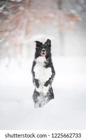 Cute Dog in flight