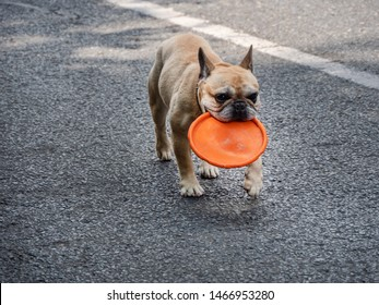 Cute Dog with flying disc