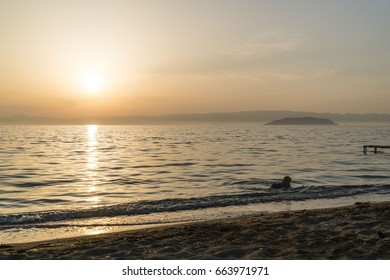 A cute dog is freely enjoying the sun, sands and the sea