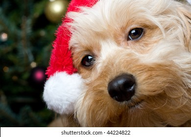 a cute dog in front of a christmas tree with a santa hat