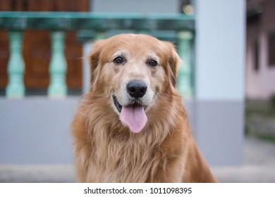 A cute dog in garden