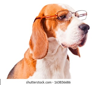 cute dog in glasses on  white background
