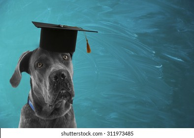 Cute dog  with grad hat near blackboard- education concept