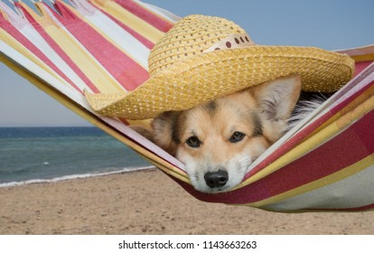 A cute dog in a hat rests in a striped hammock on the beach.
