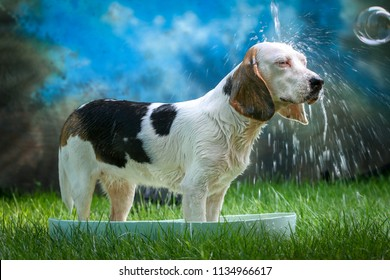 Cute dog having bath on a hot summer day with soap and sponge