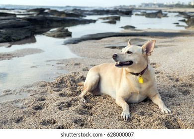 Cute dog having a good time resting on the beach at the late afternoon.