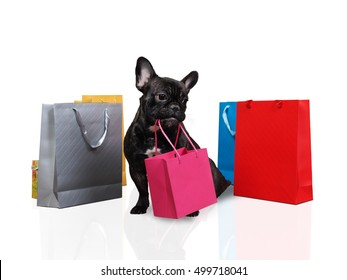 Cute dog holding in teeth a bag for purchases. Many multi-colored bags around the dog. White background. The concept of the sale, purchase, pet products