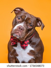 cute dog isolated in a studio shot with a colorful background