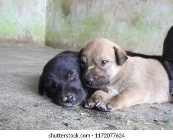 Puppy Growing Images Stock Photos Vectors Shutterstock