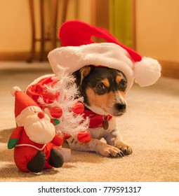 Cute dog in a large Santa's hat sits on the carpet, a toy Santa Claus and a toy Christmas tree next to him