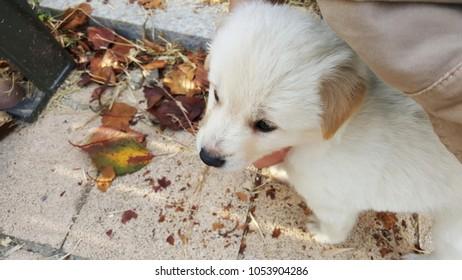 cute dog and leaf